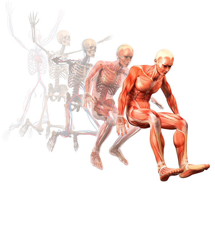 human-body-3